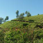 L' India nel dna – arrivo in Kerala