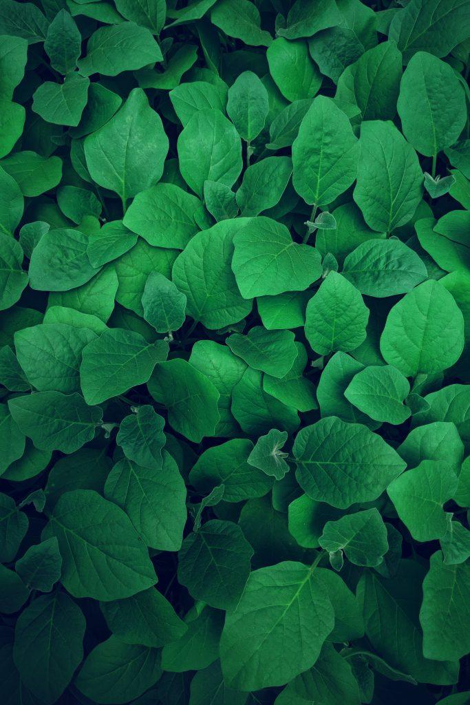 green leaves lawrence-kayku-974651-unsplash