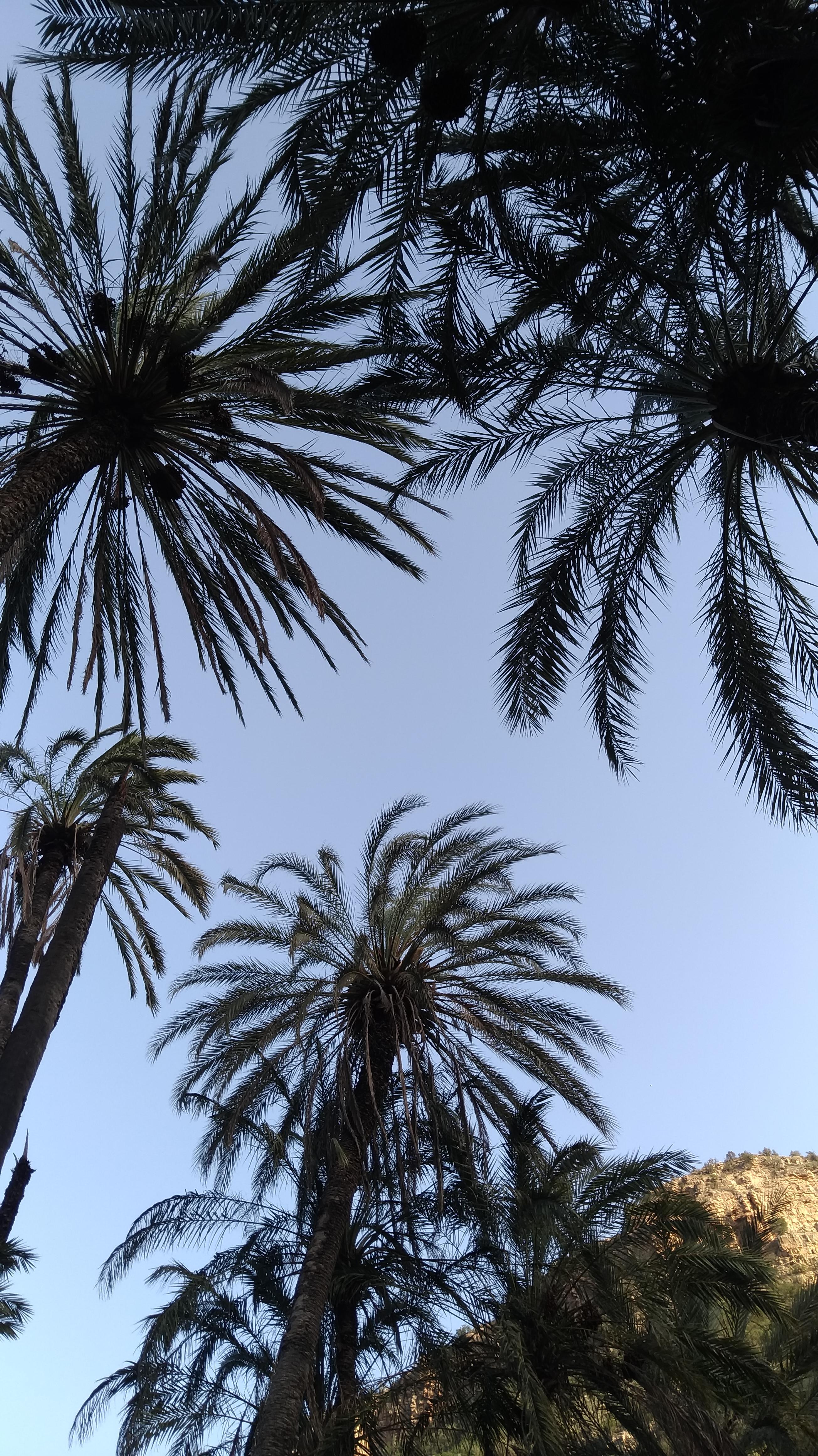 La Marrakech dei giardini. Proprio così, la città marocchina è ricca di verde.